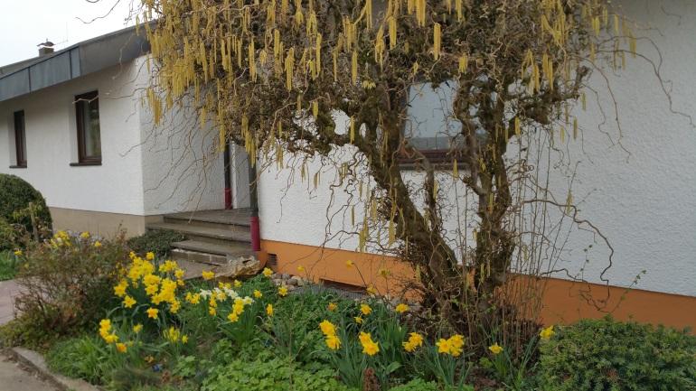 spring entrance.jpg